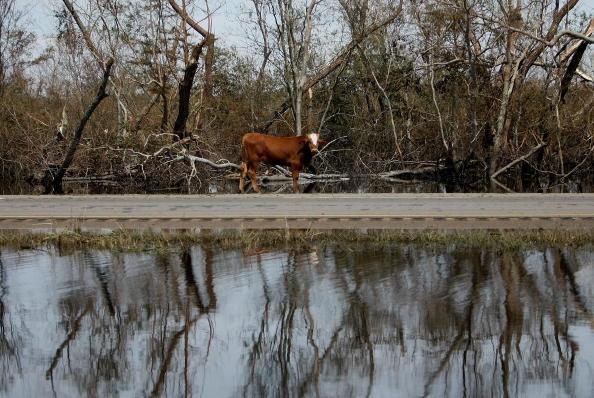 Hurricane Ike「Coastal Texas Faces Heavy Damage After Hurricane Ike」:写真・画像(13)[壁紙.com]