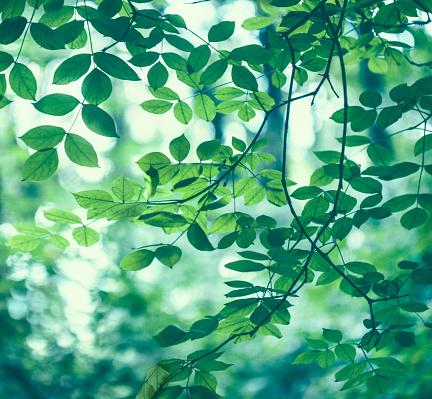 New Life「Green leaves background」:スマホ壁紙(12)