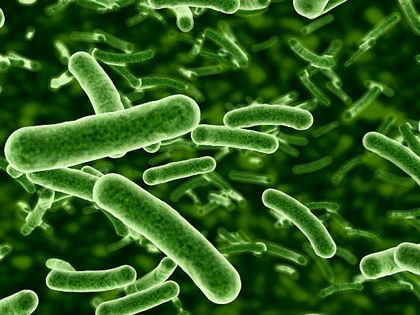 Microscope view of bacteria flowing:スマホ壁紙(壁紙.com)