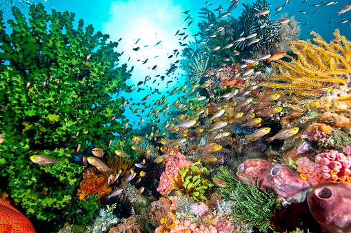 Asia「The Undersea World of Komodo.」:スマホ壁紙(14)