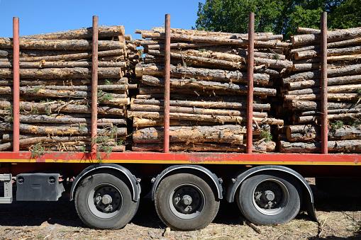 Log「Cut Logs or Timber on Timber Truck or Trailer」:スマホ壁紙(8)