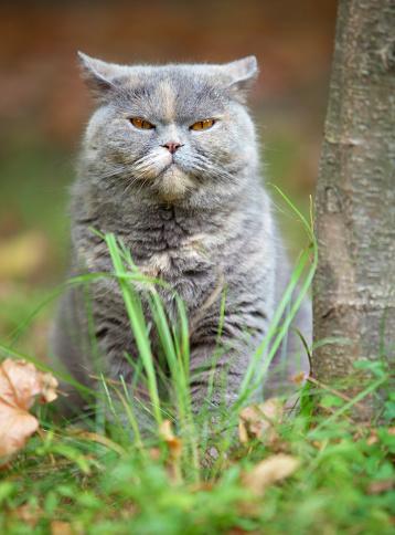 Animal Whisker「Angry Cat」:スマホ壁紙(14)