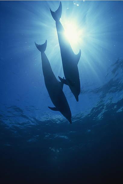 見上げるイルカのまとめ:2005年11月23日(壁紙.com)