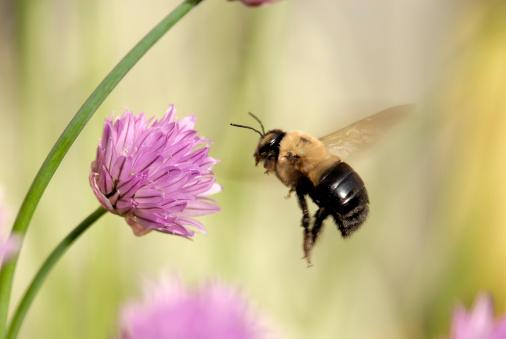 Approaching「Flight of a Bumble Bee」:スマホ壁紙(9)