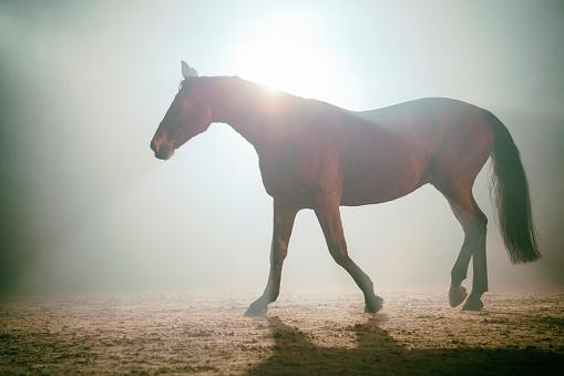 Stallion「Horse in the fog」:スマホ壁紙(10)