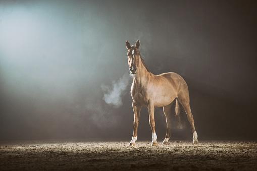 Horse「Horse in the fog」:スマホ壁紙(0)