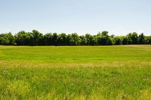 田畑「USA, New York, Hudson, View of meadow」:スマホ壁紙(6)