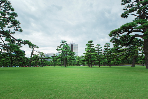 Public Park「lawn」:スマホ壁紙(11)