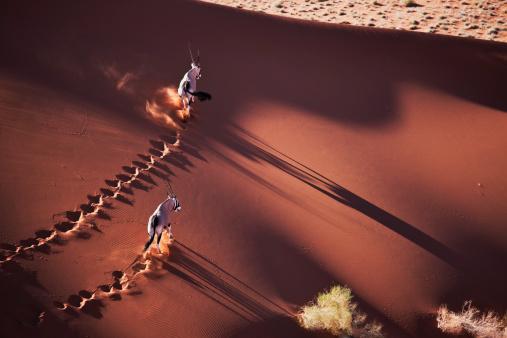 Walking「Gemsboks (Oryx gazella) on the move in desert habitat, Namib desert, Namib-Naukluft National Park, Namibia, Africa」:スマホ壁紙(10)