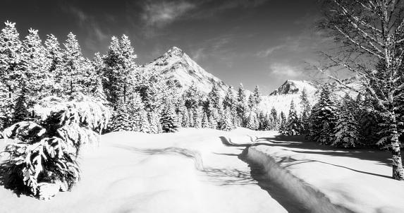 Snowdrift「Sunny Winter Landscape (B&W)」:スマホ壁紙(8)