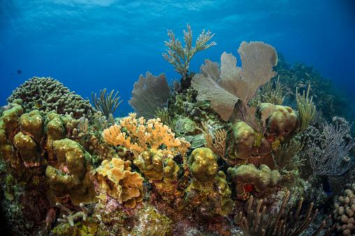 Soft Coral「Caribbean coral reef」:スマホ壁紙(18)