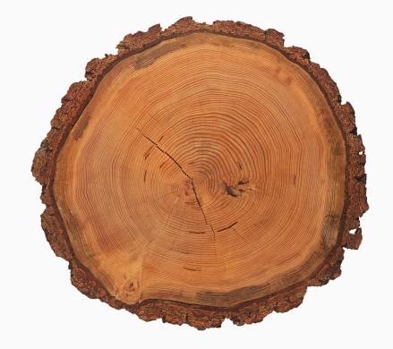 Plant Bark「Growth rings of a tree」:スマホ壁紙(6)