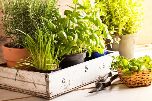 Gardening「mixed herbs in pots」:スマホ壁紙(7)