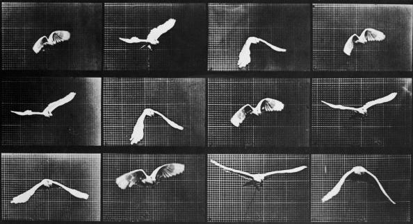 Digital Composite「Bird In Flight」:写真・画像(0)[壁紙.com]