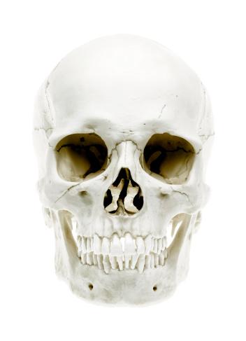 Human Skull「Skull on White」:スマホ壁紙(16)