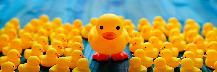 Individuality「Large yellow duck standing higher up on two feet on a turquoise colored wooden board table background with a large crowd of small yellow rubber ducks surrounding the large duck, concept image of standing out from the crowd.」:スマホ壁紙(6)