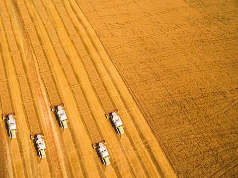田畑「麦畑の収穫」:スマホ壁紙(16)