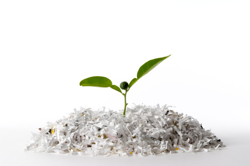 Recycling「Isolated shot of plant growing shredded paper on white background」:スマホ壁紙(8)