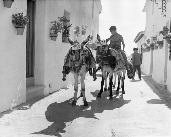 Mijas「Spanish Donkey Ride」:写真・画像(3)[壁紙.com]