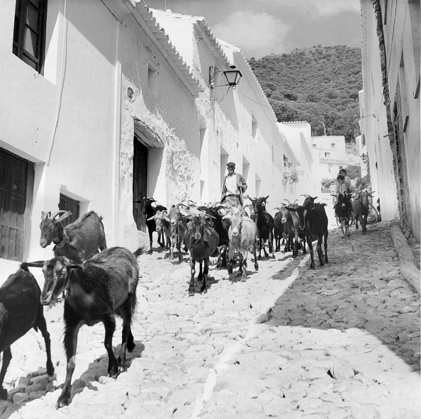 Mijas「Village Of Goats」:写真・画像(11)[壁紙.com]