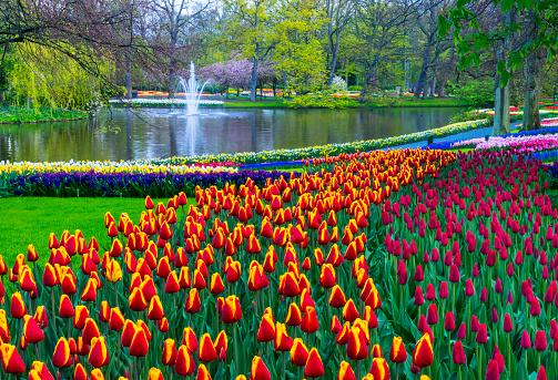 Keukenhof Gardens「Spring Flowers in a park.」:スマホ壁紙(13)