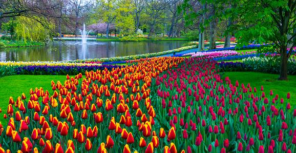 Keukenhof Gardens「Spring Flowers in a park.」:スマホ壁紙(2)