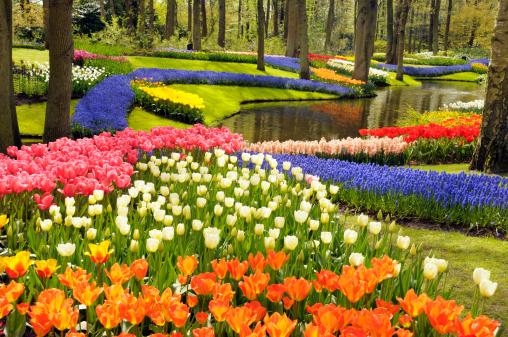 Keukenhof Gardens「Spring flowers」:スマホ壁紙(1)