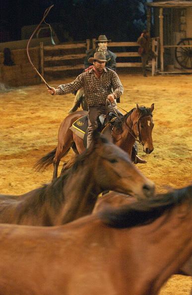 Horse「The Man from Snowy River Media Call」:写真・画像(16)[壁紙.com]