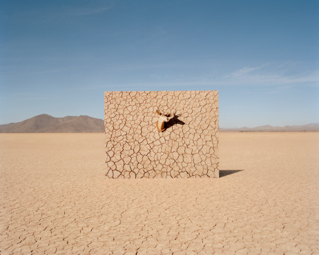大昔の「Deer head on cracked mud wall in desert」:スマホ壁紙(14)