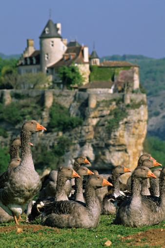 Nouvelle-Aquitaine「Dordogne Postcard」:スマホ壁紙(6)