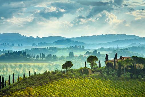 Italian Cypress「Landscape with vineyard in Tuscany, Italy」:スマホ壁紙(5)