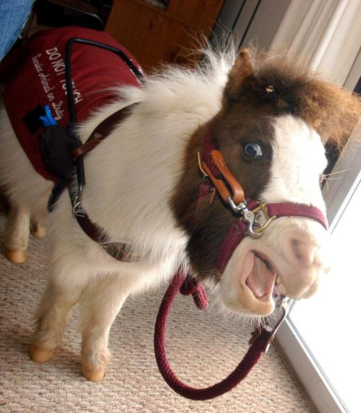 Horse「Tiny Horse Keeps Eyes On Big Responsibility」:写真・画像(19)[壁紙.com]