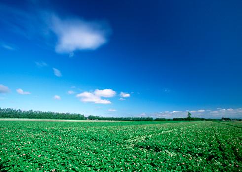 Hokkaido「Potato Field」:スマホ壁紙(17)
