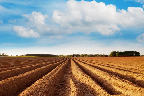 Plowed Field「Potato field」:スマホ壁紙(17)