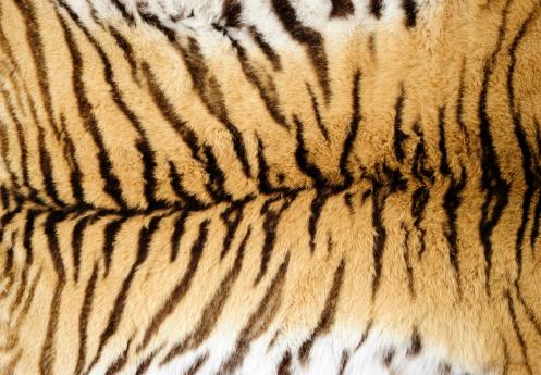 Animal Hair「tiger fur」:スマホ壁紙(14)