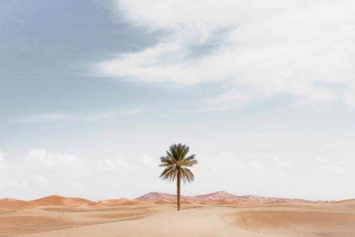 寂しさ「Palm tree in desert landscape」:スマホ壁紙(9)