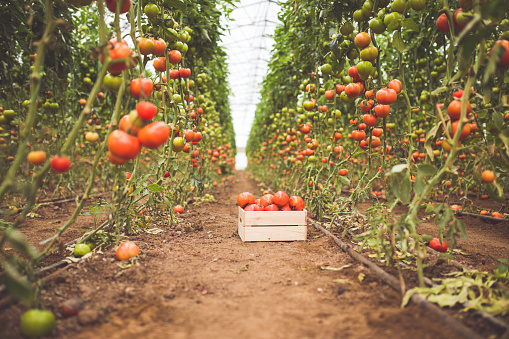 Organic Farm「It's Organic」:スマホ壁紙(13)