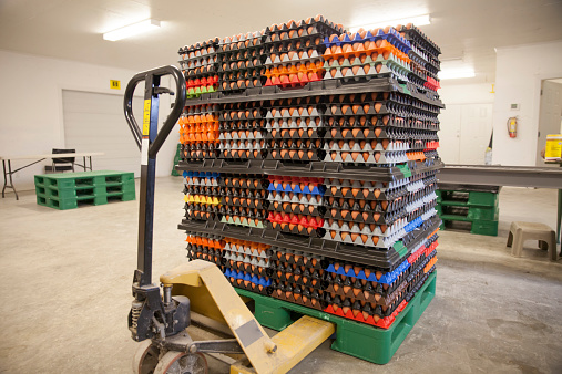 British Columbia「Brown eggs at commercial poultry farm.」:スマホ壁紙(5)