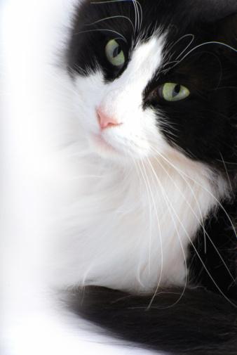 Named Animal「Black and White Cat」:スマホ壁紙(10)