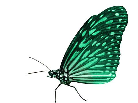 Emergency Services Occupation「Beautiful Butterfly」:スマホ壁紙(8)