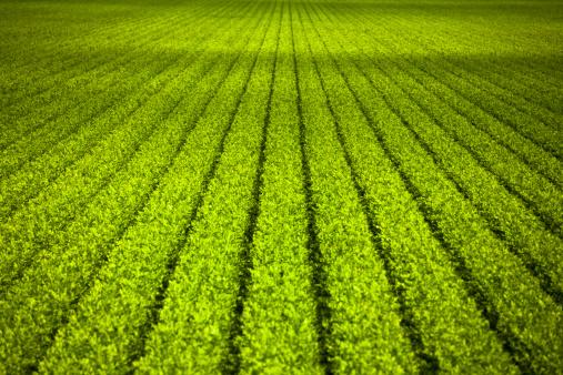 Planting「Crops grow on fertile farm land」:スマホ壁紙(3)