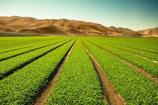 Monterey Peninsula「Crops grow on fertile farm land」:スマホ壁紙(16)
