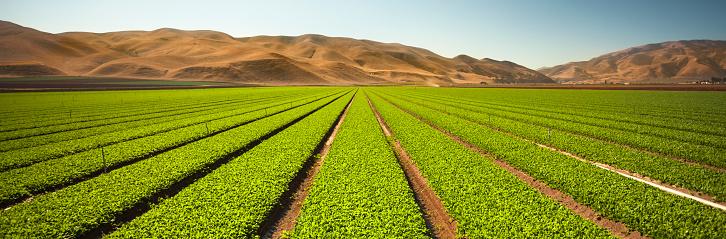 Planting「Crops grow in rows on a rural farm panorama」:スマホ壁紙(6)