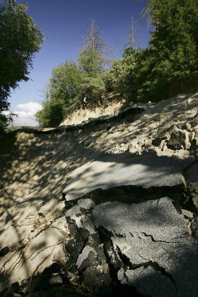 Plant Bark「More Than 2,000 Miles Of Fire Access Roads Damaged In Southern California」:写真・画像(9)[壁紙.com]