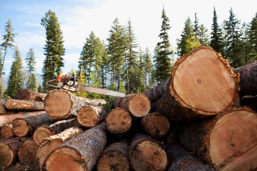 Log「USA, Montana, electric saw on stack of logs」:スマホ壁紙(0)