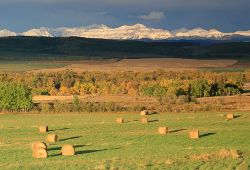 Aspen Tree「Alberta Rocky Mountains and Hay Bales」:スマホ壁紙(6)