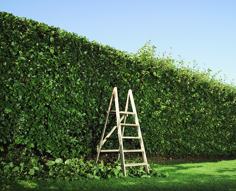 Hedge「Step ladder by partially pruned hedge」:スマホ壁紙(19)