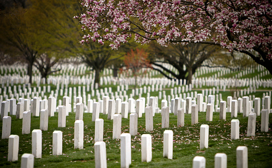 花見「アーリントン国立墓地」:スマホ壁紙(6)