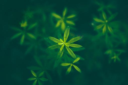 Growth「Forest flower Background」:スマホ壁紙(5)