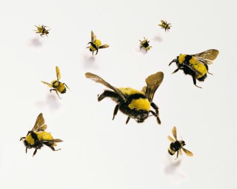 Medium Group Of Animals「Bees」:スマホ壁紙(1)